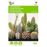 Cactus Mengsel van vele soorten