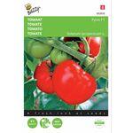 Tomaten Pyros F1 hybride