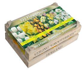 100 Bloembollen in houten kist