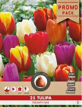 A Tulpen bloembollen Triuph Mix