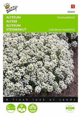 Alyssum, Sneeuwkleed