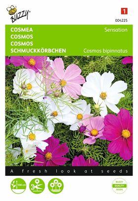 Cosmos Sensation