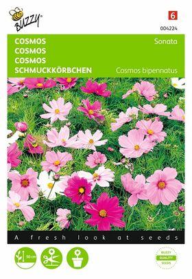 Cosmos Sonate gemengd