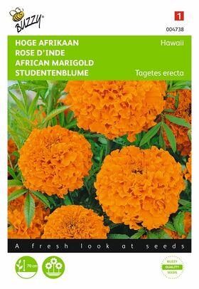 Hoge grootbloemige Afrikaan Hawaii Oranje, reukloos