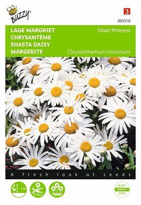 Margriet Nanum Silver Princess wit Leucanthemum