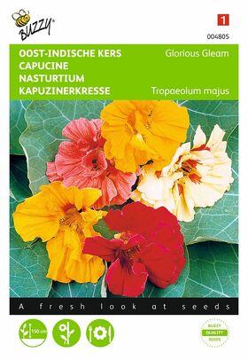 oost-indische kers bloemzaden