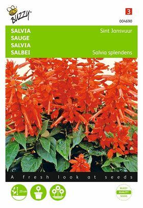 Salvia St. Jansvuur bloemzaden