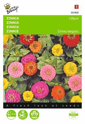 Zinnia Liliput dubbelbl. gemengd