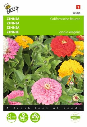 Zinnia Californische Reuzen Mix