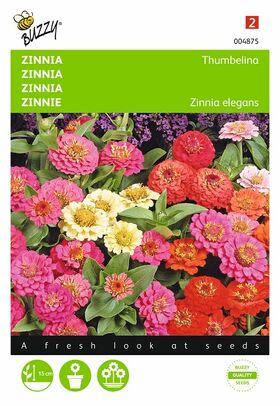 Zinnia Thumbelina gemengd