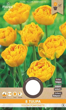 A Tulpen bloembollen Yellow Pomponette