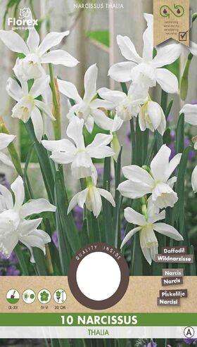 Narcissen bloembollen Wit Thalia