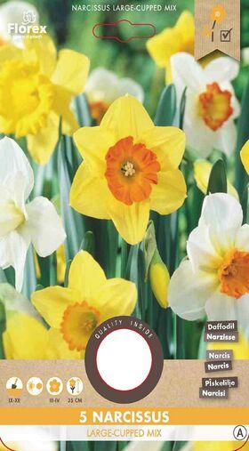 Narcissen bloembollen Mix Groot
