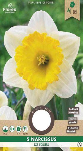 Narcissen bloembollen Geel Wit Ice Follies